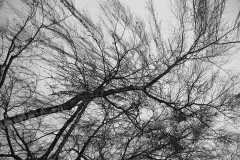 Branches02