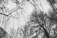 Branches04