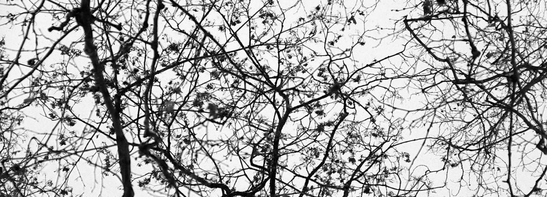 Photo branches pour la couverture d'Unfilm noir et blanc, texte écrit par Jessica Luhahe